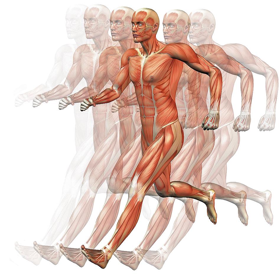 Todo lo que necesitas saber del cuerpo humano en \