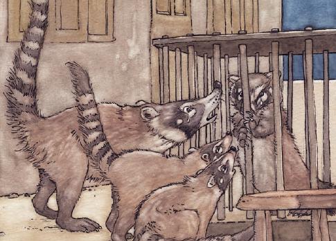 coati en una jaula y tres coatis llorando en uno de los cuentos de la selva