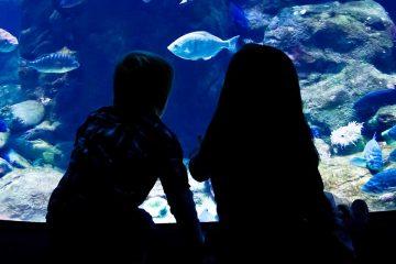 Imagen de dos niños en un acuario para ilustrar la importancia de explorar el océano desde el aula