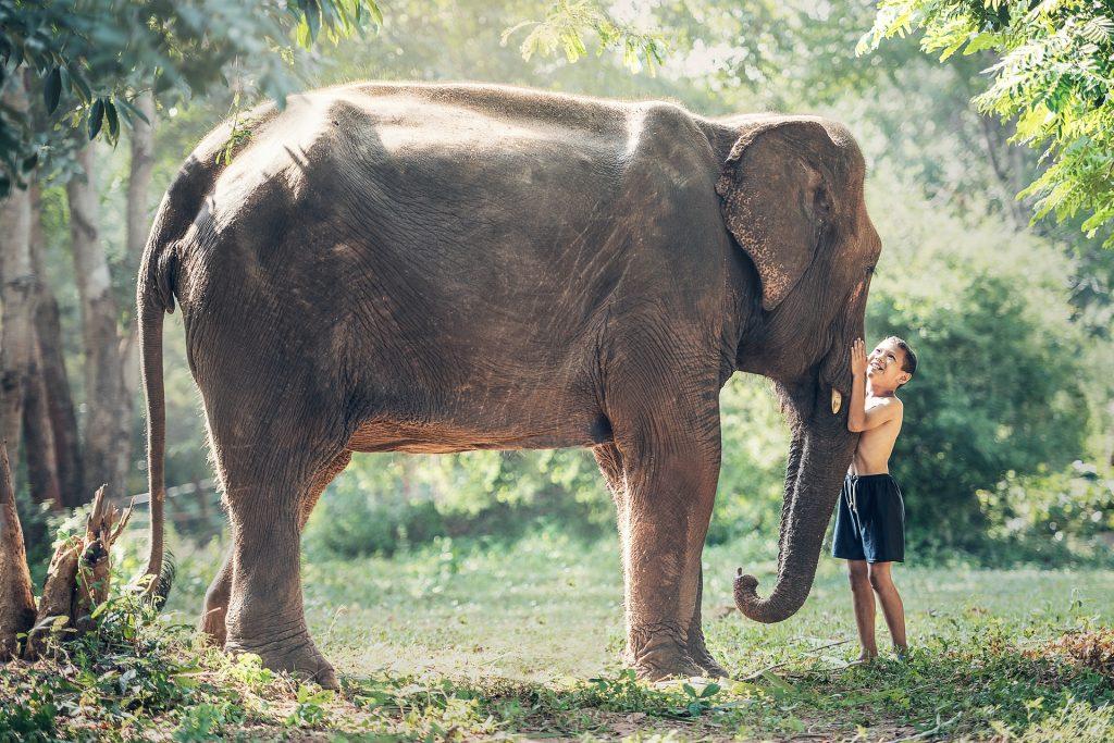 Niño abrazando la trompa de un elefante para ilustrar la fascinación infantil por los animales