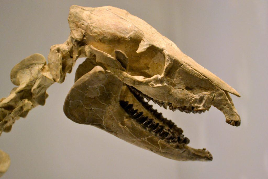Esqueleto de dinosaurio que ilustra visita al museo con niños