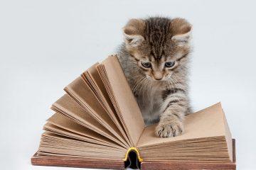 Gato con libro para celebrar el Día Internacional del Gato