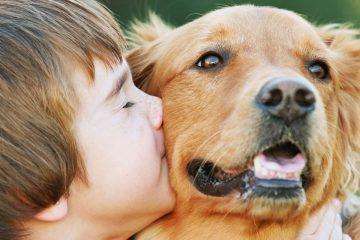 Niño abrazando y besando un perro de la raza Golden Retriever para conmemorar el Día Mundial de los Animales