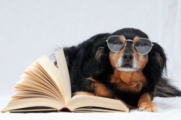 Perro con gafas sobre un libro abierto para celebrar el Día Internacional del Perro