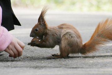 Nena amb un esquirol per il·lustrar la importància de la diversitat animal