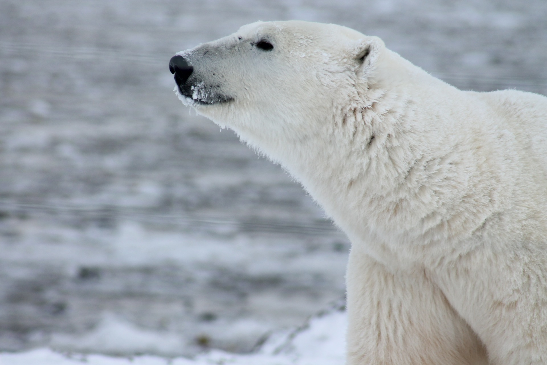 Oso Polar y la diversidad animal