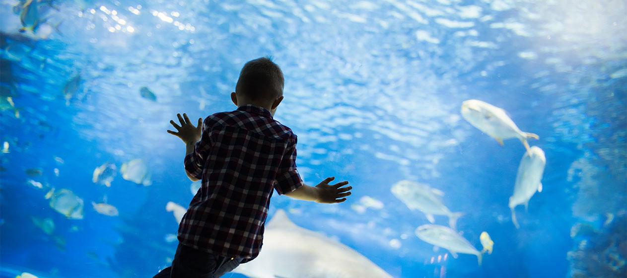 Niño mirando peces nadando en oceanario pra el Día de los océanos