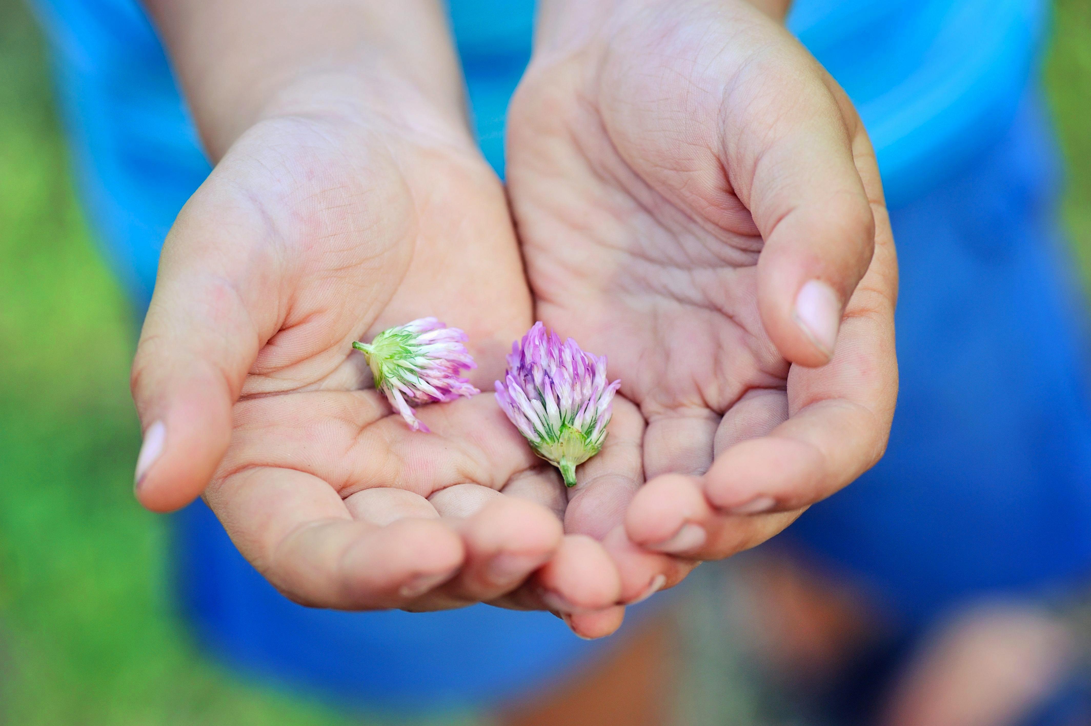 Niño con flores del trébol en las manos